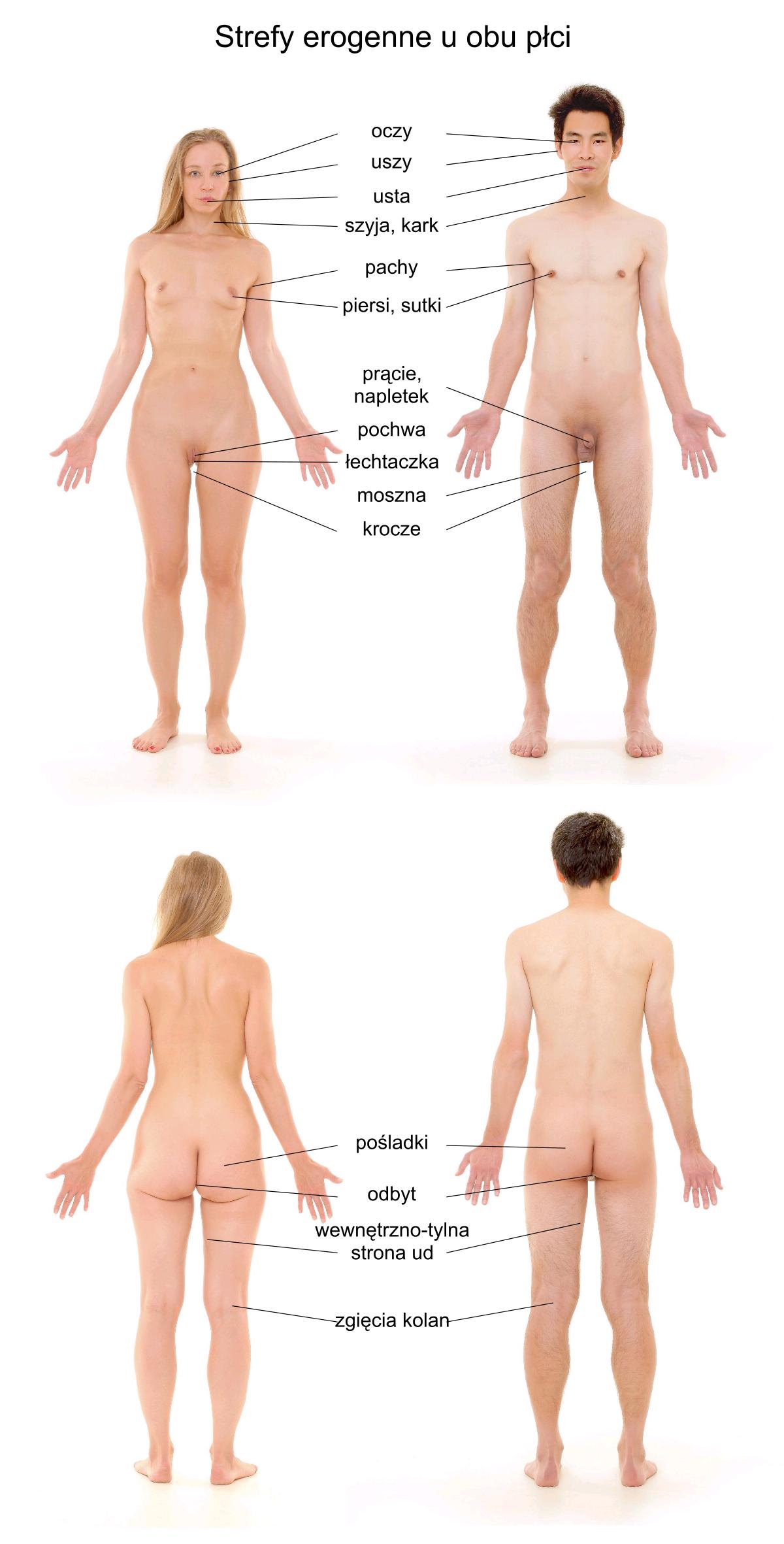 mapa stref erogennych